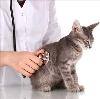 Ветеринарные клиники в Алапаевске